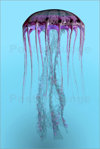 Poster Pelagia noctiluca jellyfish illustration.