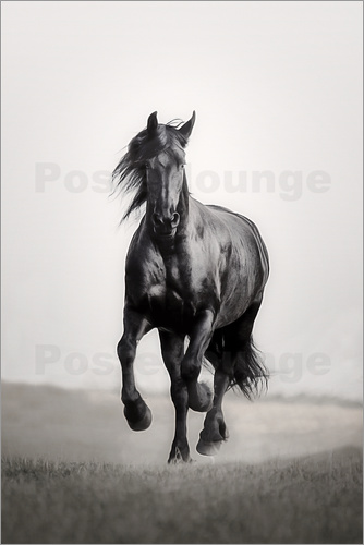 Poster Horse Friesian in the steppe