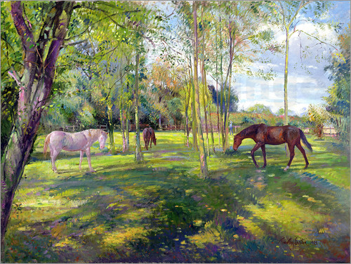 Poster Horse paddock