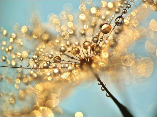 Julia Delgado - Dandelion umbrellas with gold drops