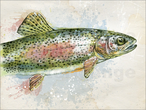 Ashley Verkamp - Splashing Rainbow Trout