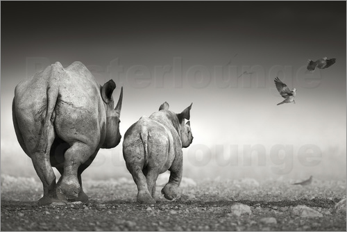 Poster Rhinoceros cow and calf walking away together