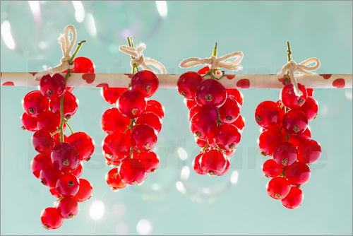 Poster Red currants full