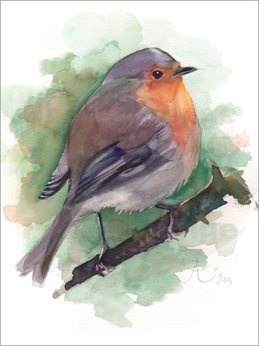 Poster Red Robin, bird watercolor