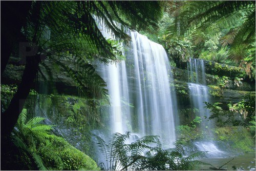 Kevin Schafer - Russell Falls and tree ferns