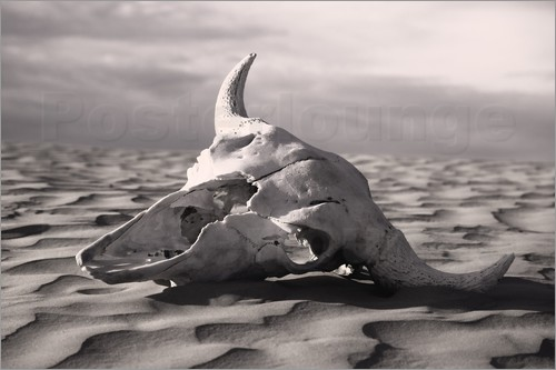 Carson Ganci - Skull in the desert