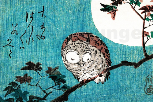 Poster Sleeping Owl full moon
