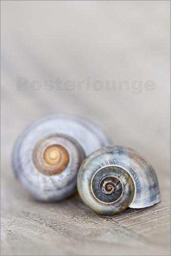 posters affiches de snail shell posterlounge. Black Bedroom Furniture Sets. Home Design Ideas
