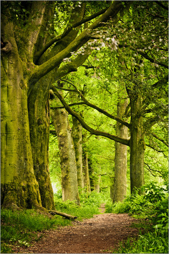 Poster Beautiful spring colors in a forest