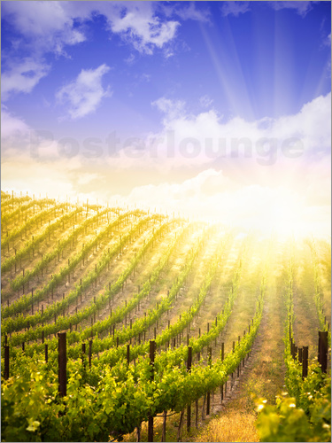 Poster Beautiful Vineyard