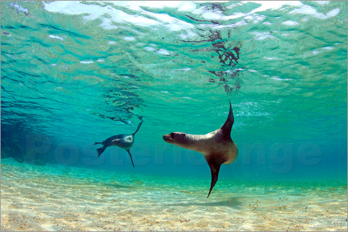Paul Kennedy - Sea lion lagoon Galapagos Islands