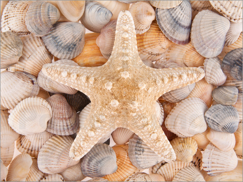 Poster Starfish on cockleshells