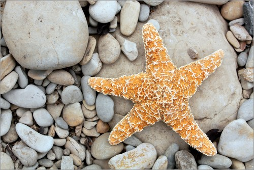 Poster Starfish on a beach