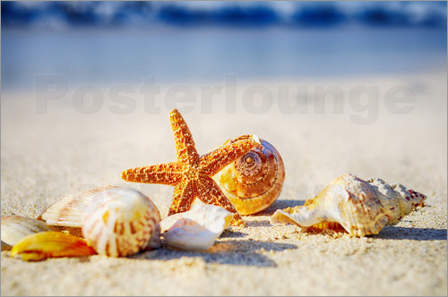 Poster Starfish and sea shells