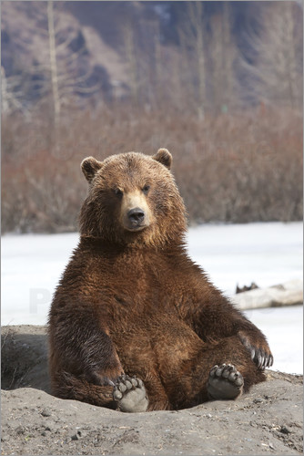 Doug Lindstrand - sitting Brown Bear