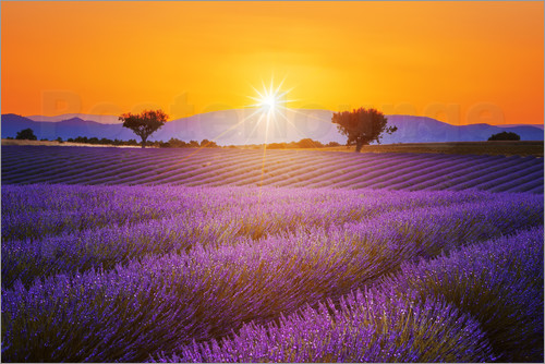 Poster Sun over lavender