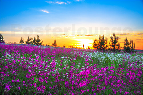 Sunrise over a blossoming meadow