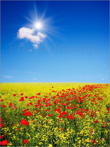 Sunny landscape with flowers in a field