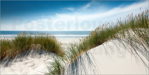 Poster Dune with fine shining marram grass