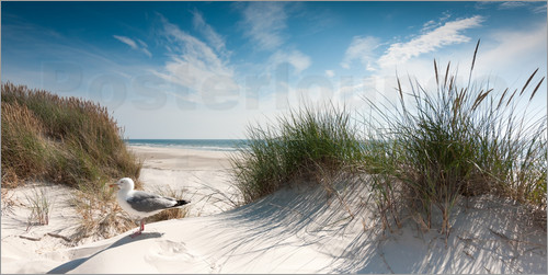 Reiner Würz RWFotoArt - Sylt - Dune with fine beach grass and seagull