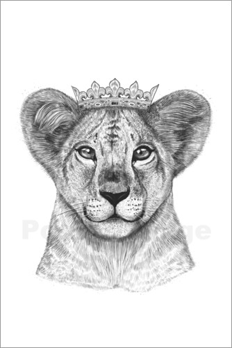 Poster The kid lion