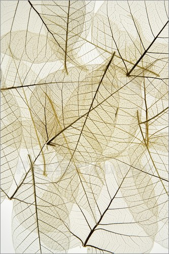 Kelly Redinger - Layered Leaves