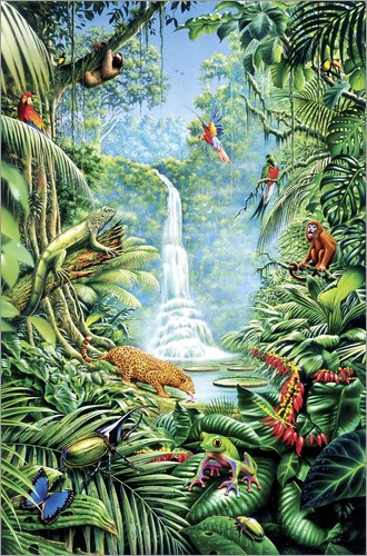 Poster Save the rainforest