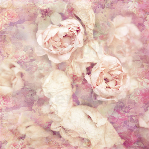 Poster Faded roses