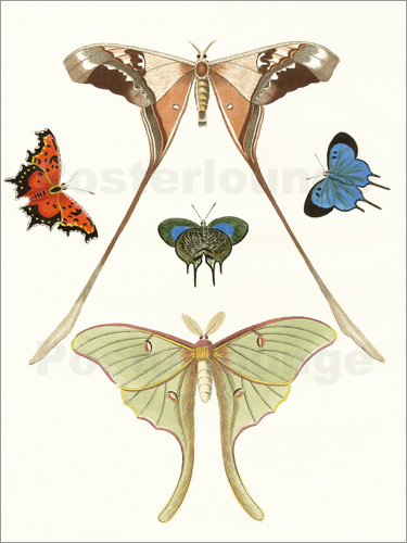 Poster Different kinds of butterflies