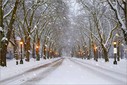 Jamie & Judy Wild - Snow covered trees and falling snow on an illuminated street