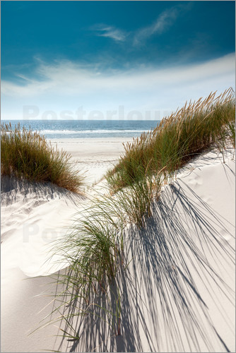 Poster Dunes with fine beach grass