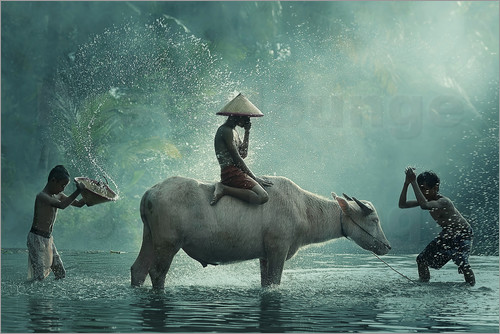 Vichaya - Water Buffalo