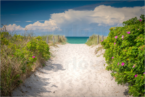 Poster Path through dunes of baltic sea