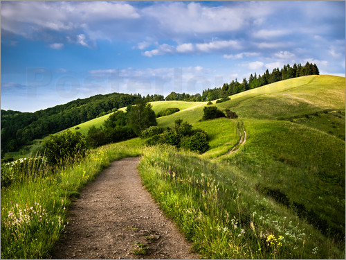 Poster Path over Rolling Hills in Summer