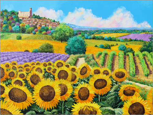 Poster Vineyards and sunflowers in Provence