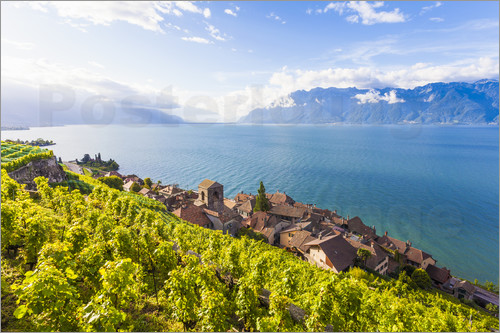 Poster St. Saphorin in the Lavaux region