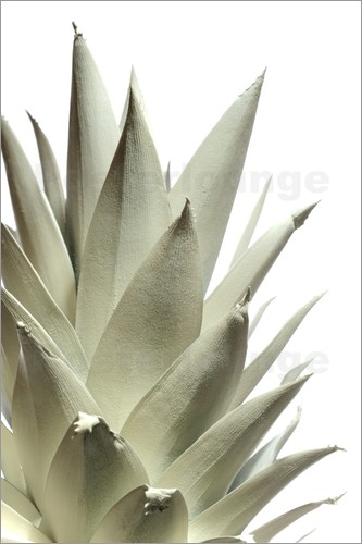Poster White pineapple