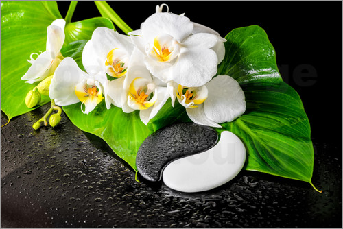 Poster White orchids and Yin-Yang stones