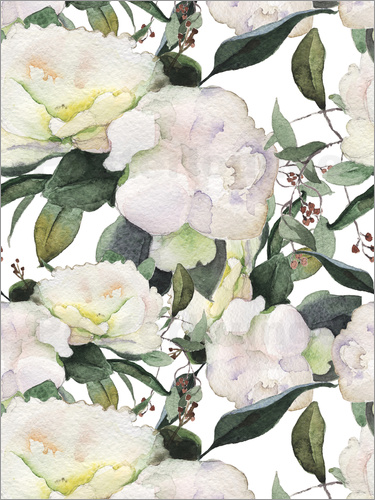 White Peony in watercolor