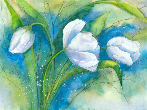 Poster white tulips