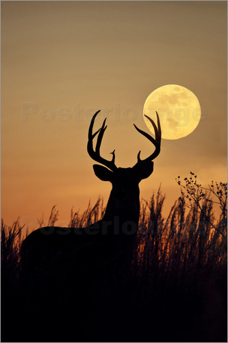 Poster White-tailed Deer, buck with full moon