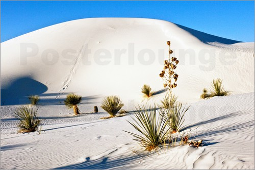 Poster White Sands National Monument - Transverse Dunes and Soaptree Yucca