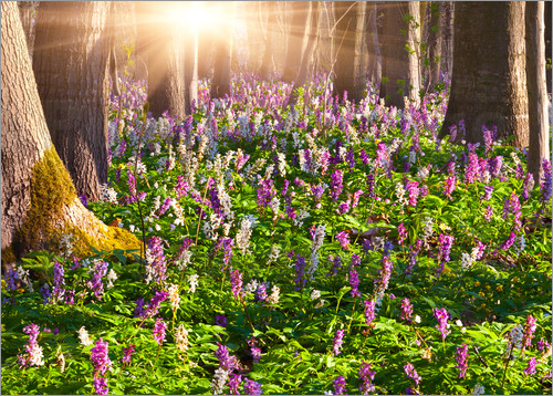 meadow flowers in spring forest