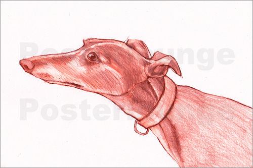 Jim Griffiths - Greyhound pencil drawing white and red colour pencil sketch