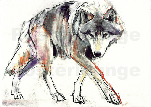 Mark Adlington - Wolf in search