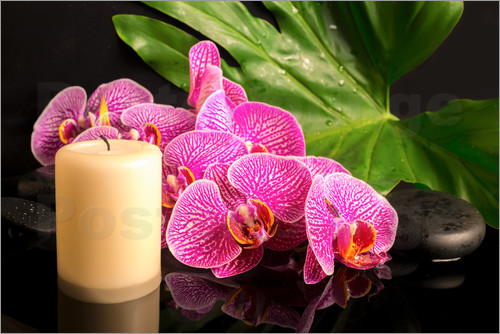 Poster Zen still life with orchids