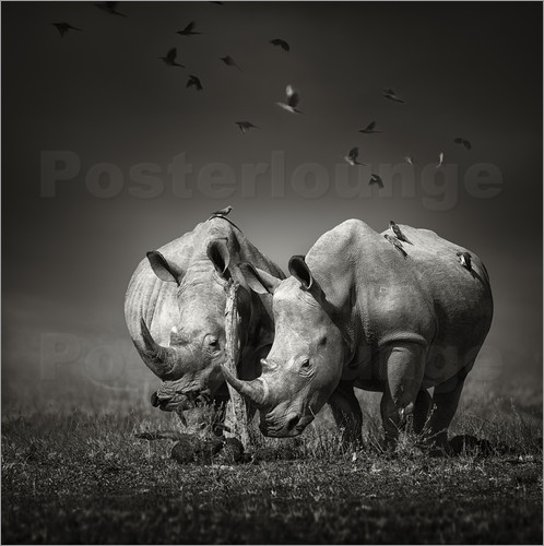 Poster Two Rhinoceros with Birds