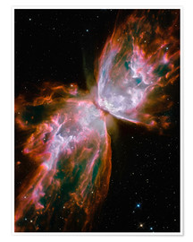 Premium poster  The Butterfly Nebula - Stocktrek Images