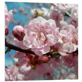 Foam board print  Cherry Blossoms - blackpool