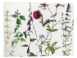 Foam board print  Eight Studies of Wild Flowers - Albrecht Dürer